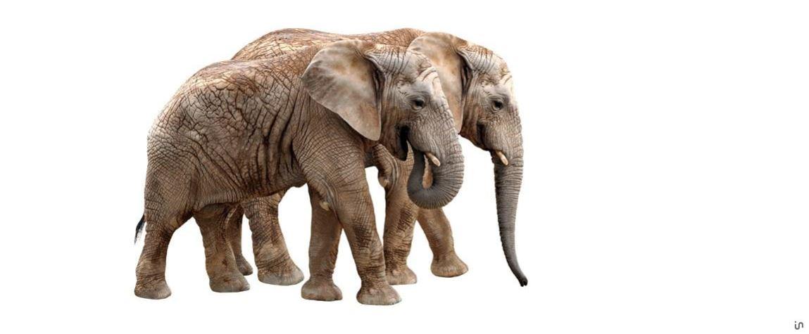 Elefant Konvex8