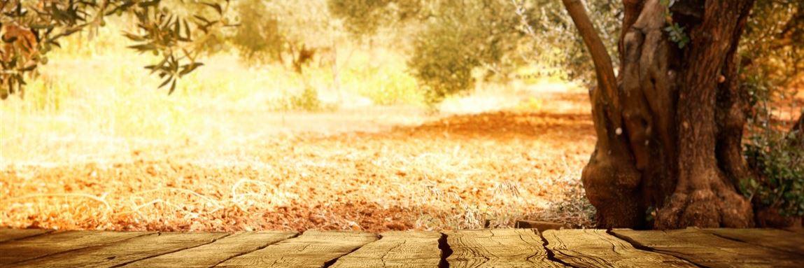 Herbstbild Konvex7