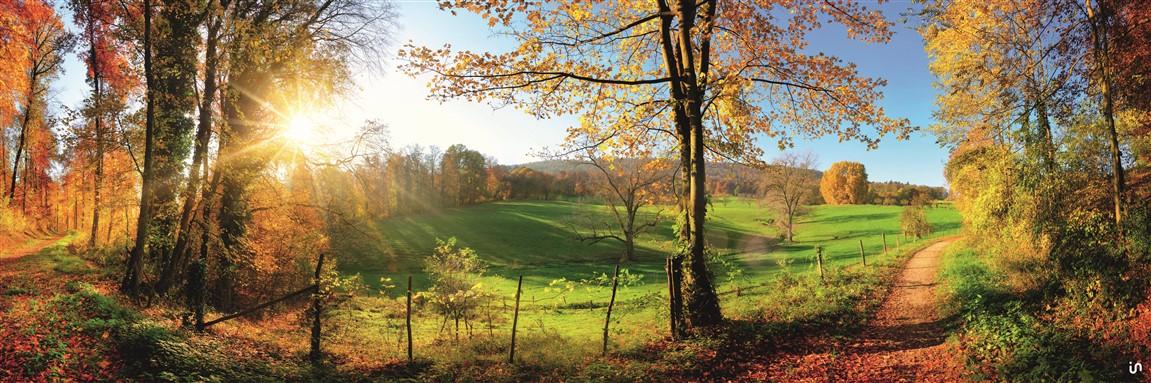 Herbstwald rechts Konvex7