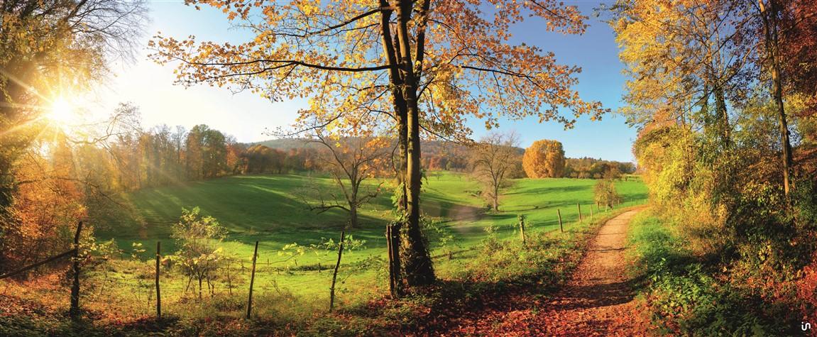 Herbstwald rechts Konvex8