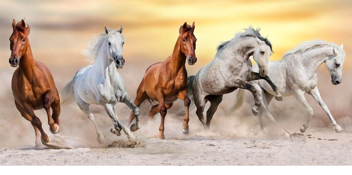 Pferde Konvex111