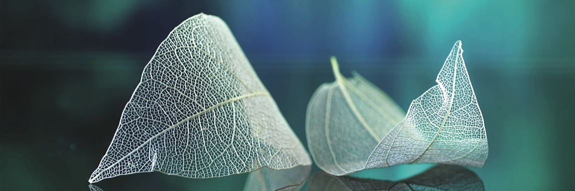 Skeleton Leaves 2 Konvex7