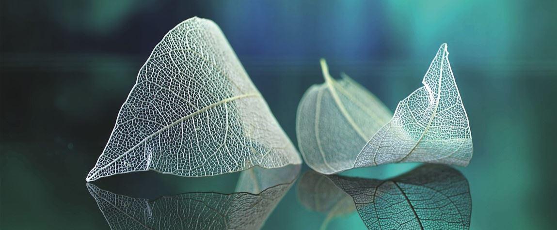 Skeleton Leaves 2 Konvex8