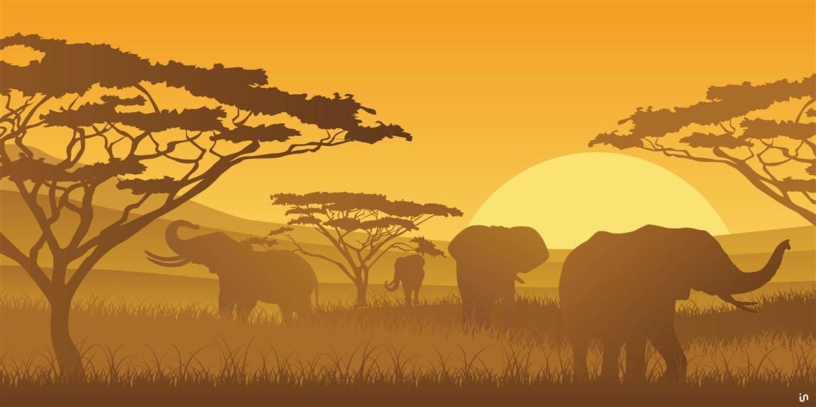 Afrika Konvex11