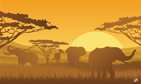 Afrika Konvex2