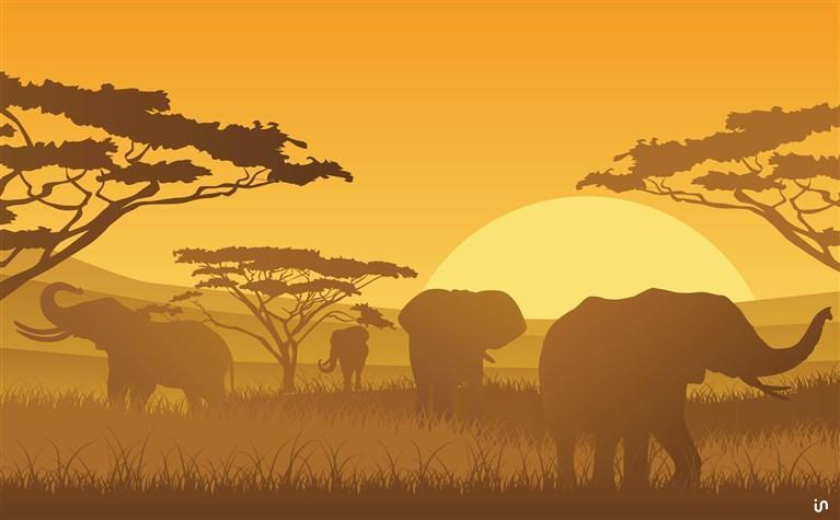 Afrika Konvex6