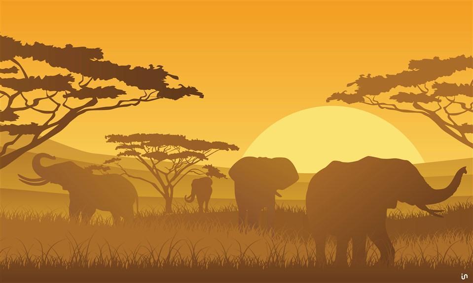 Afrika Konvex9