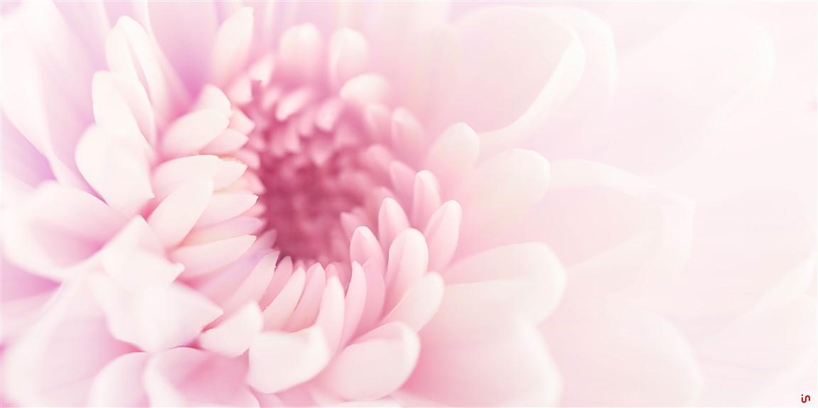 Blume Pastell Konvex11