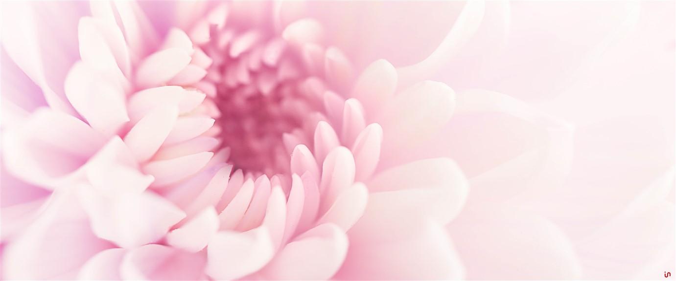 Blume Pastell Konvex13