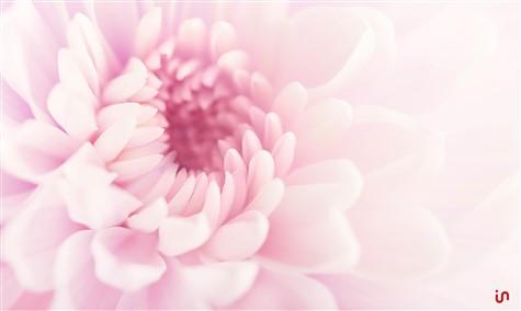 Blume Pastell Konvex2