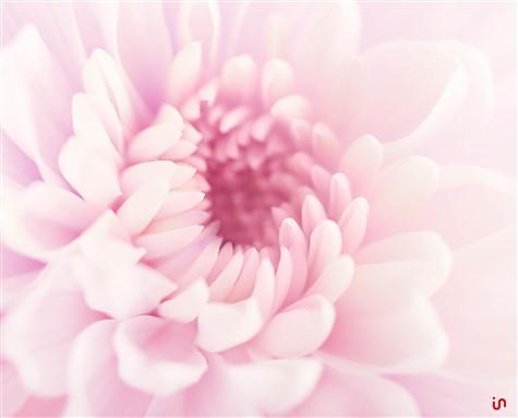 Blume Pastell Konvex3