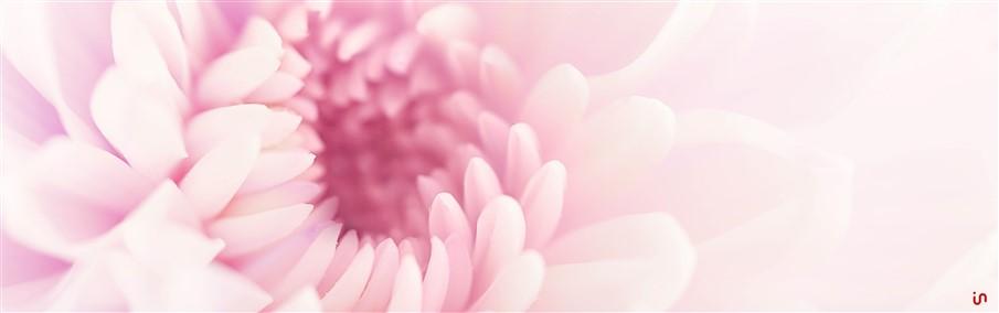 Blume Pastell Konvex4