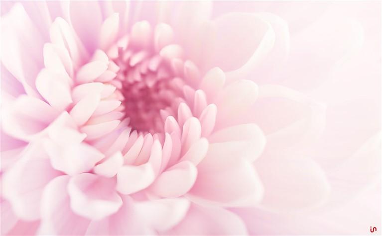Blume Pastell Konvex6