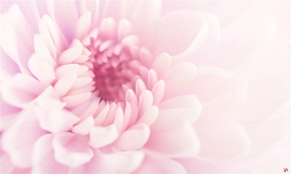 Blume Pastell Konvex9