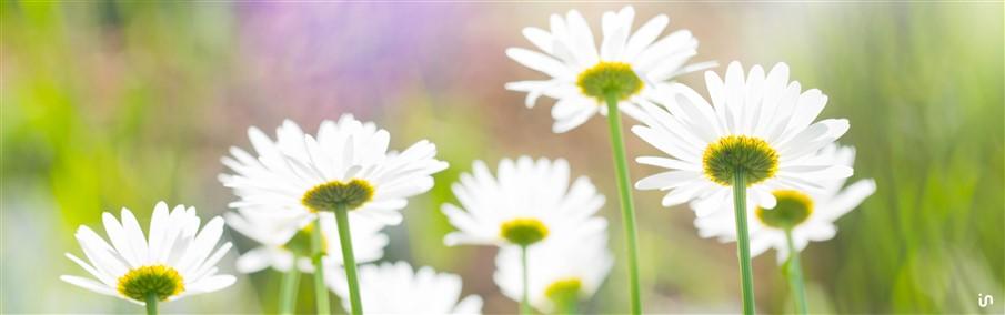 Blumenwiese Konvex4