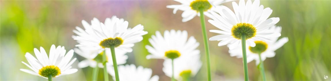 Blumenwiese Konvex5