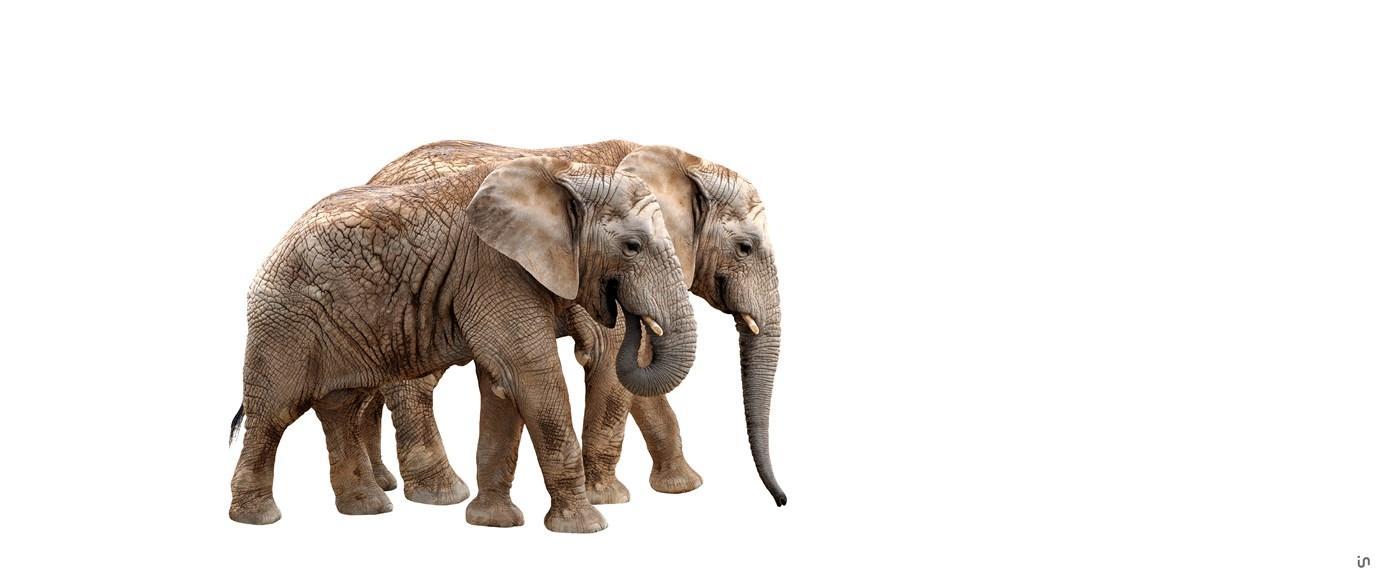Elefant Konvex13