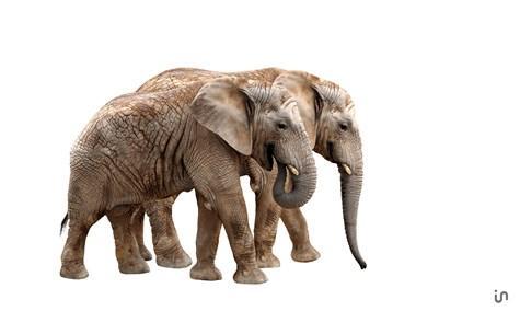 Elefant Konvex2
