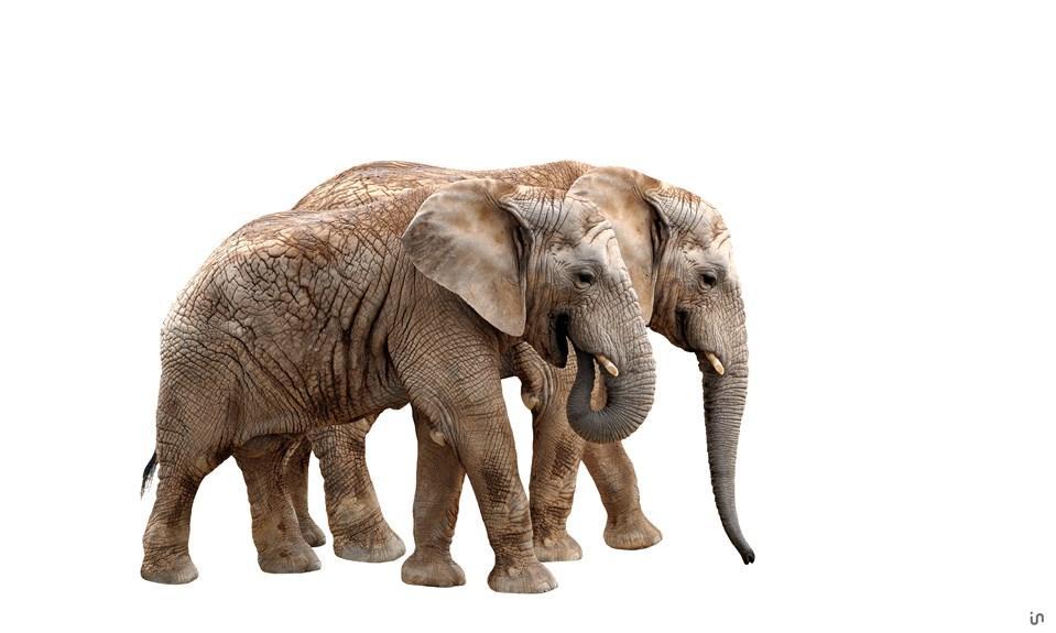 Elefant Konvex9