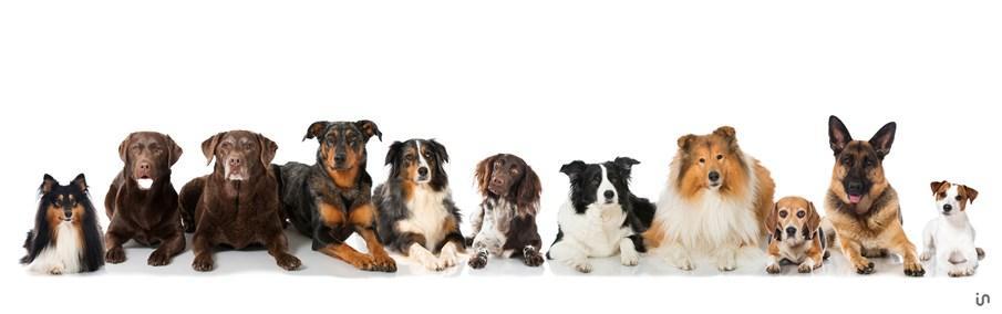 Hunde Konvex4