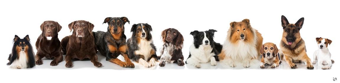 Hunde Konvex5
