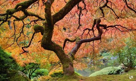 Lebensbaum Konvex2
