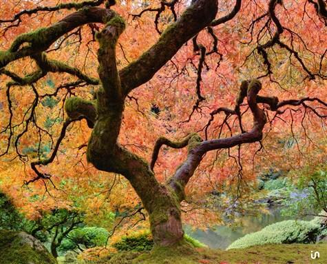 Lebensbaum Konvex3