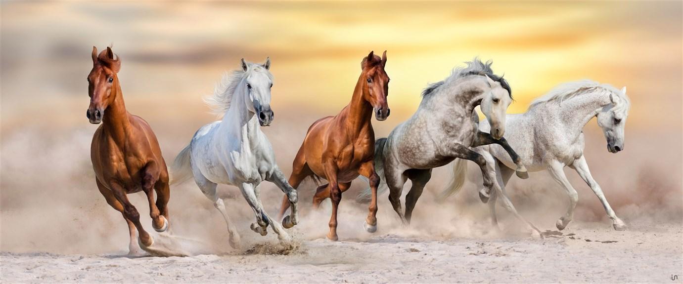 Pferde Konvex13