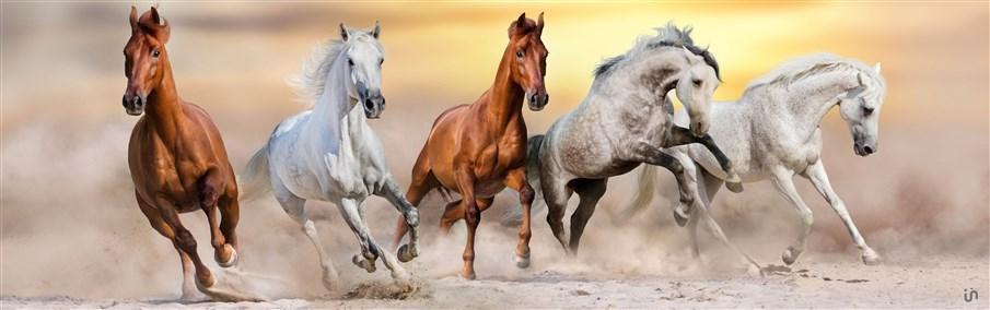 Pferde Konvex4