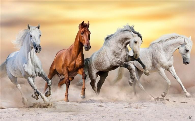 Pferde Konvex6