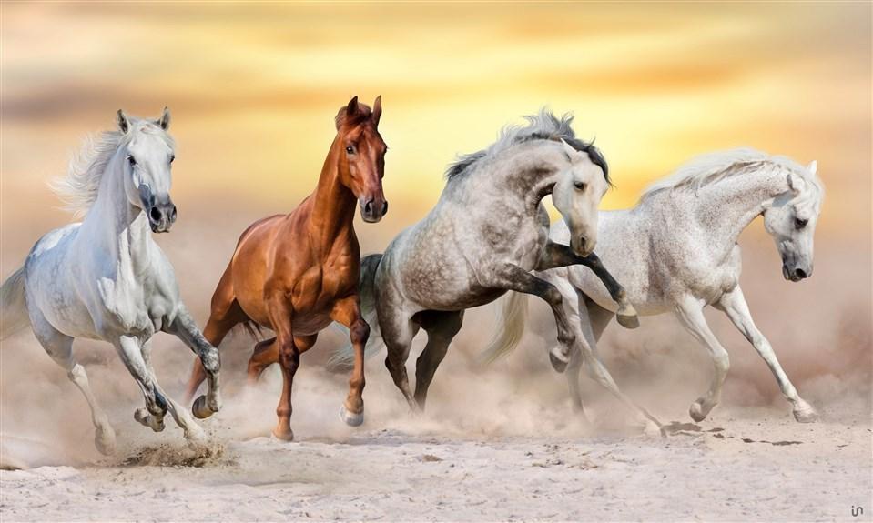 Pferde Konvex9