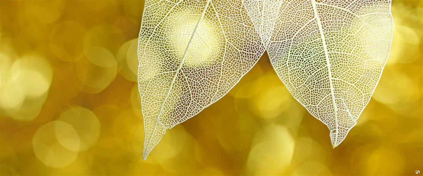 Skeleton Leaves Konvex13